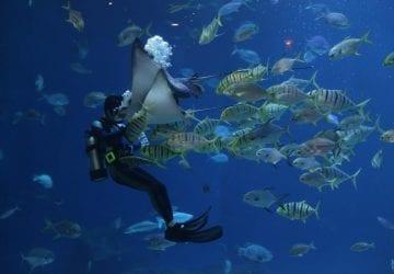 dove fare immersioni nelle Maldive