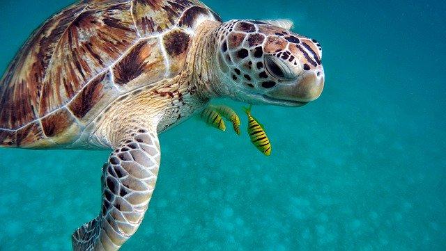 immersioni alle maldive cosa vedere e come fare